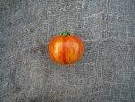 Помидор, томат сорт Авьюри (Авюри)
