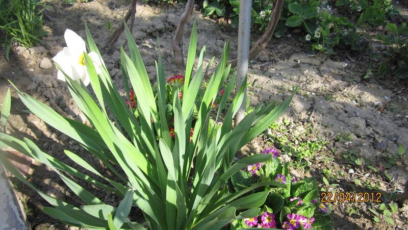 Красные,желтые,сиреневые жмурочки(липованское) цветут до осени  )