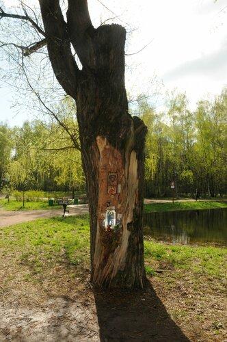 Иконы и дерево