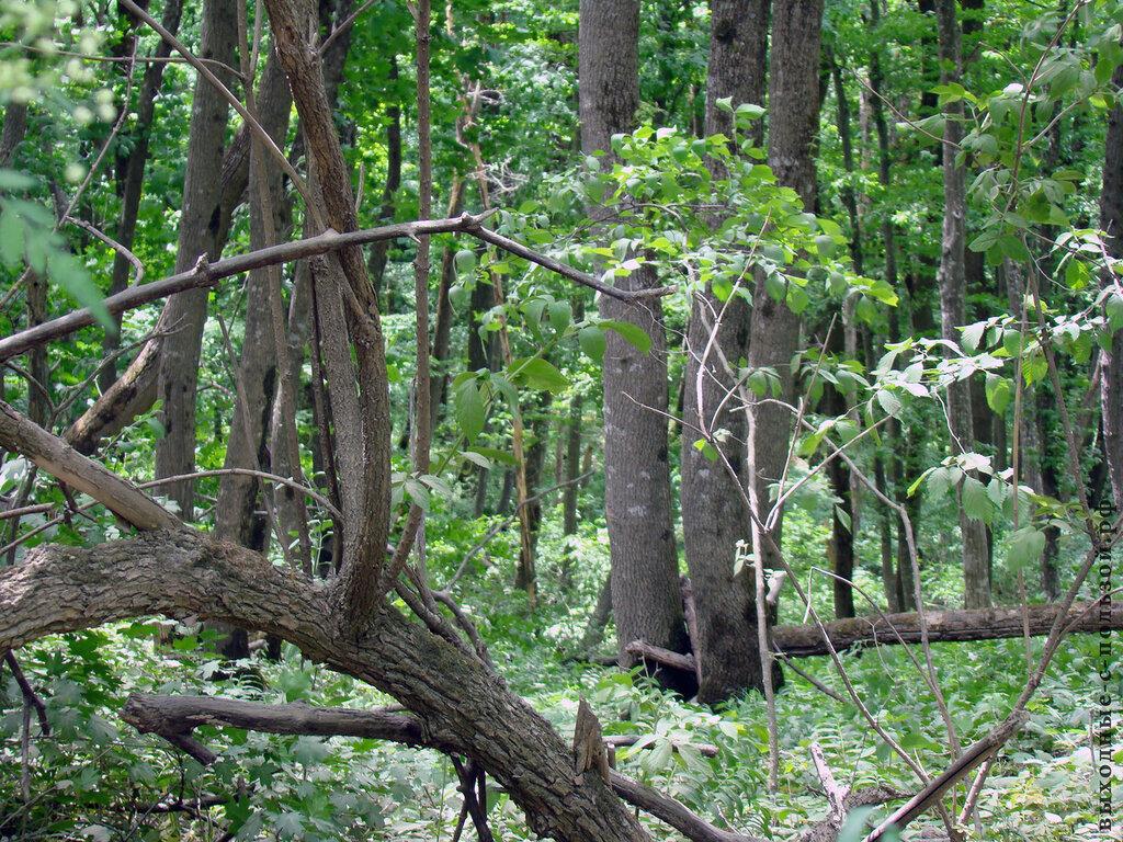 Лес в Ставрополе