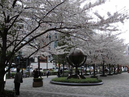 Вечерняя улица Косю Кайдо.Токио.Апрель.