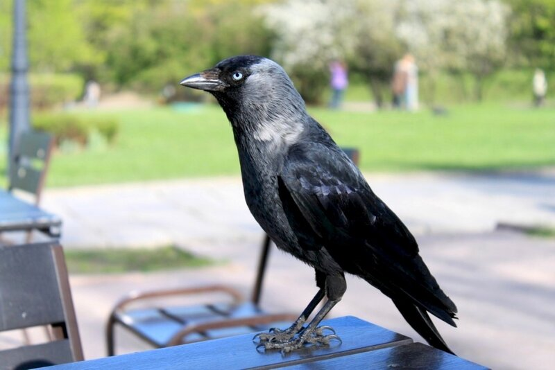 Неизвестная голубоглазая птица