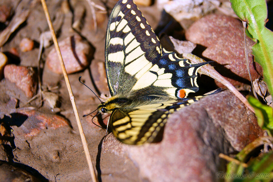 Весенние фотографии, бабочка