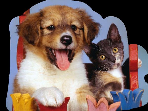 http://img-fotki.yandex.ru/get/6109/39663434.104/0_716d0_b5811171_XL.jpg