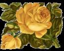 """Оригинал схемы вышивки  """"Жёлтые розы """"."""
