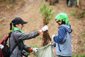 В течение года в Приморье высажено более 2,5 миллионов деревьев разных пород