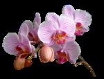 378-flower-LB TUBES.png