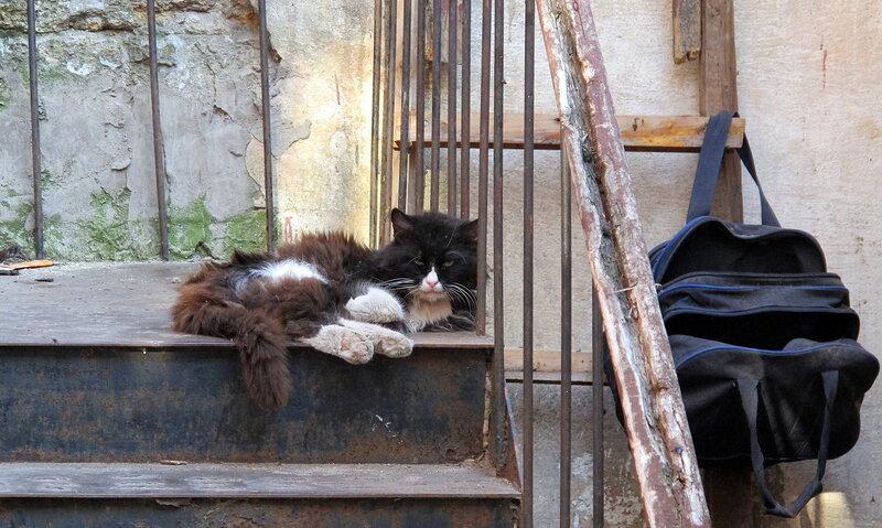 Одесские кошки