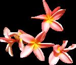 feli_syd_flowers.png