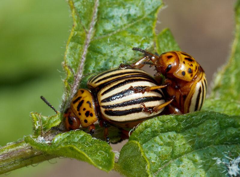 Удивительное макро насекомых!