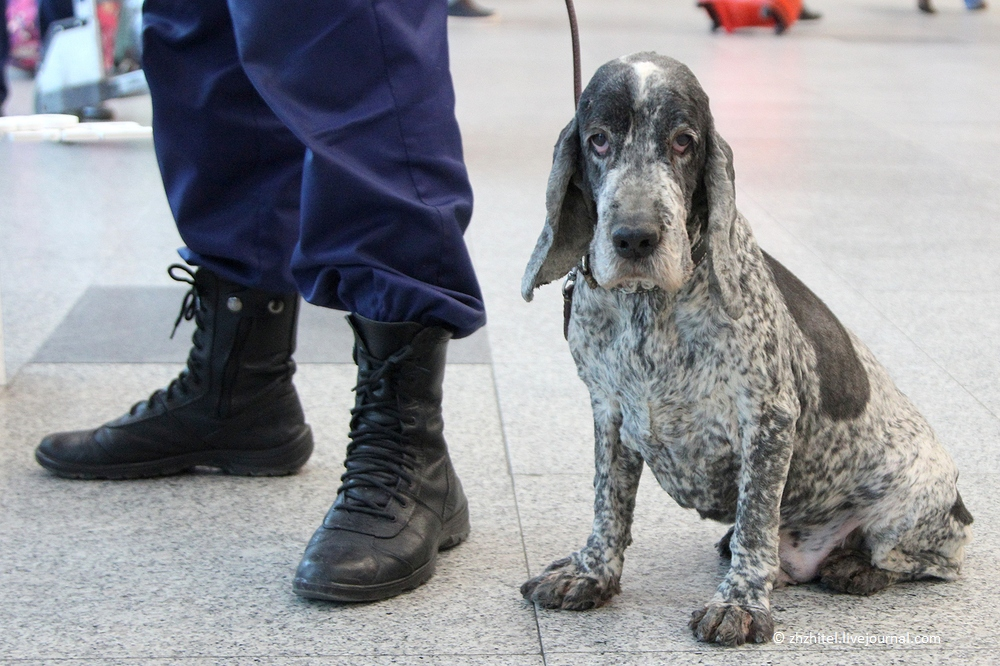 Дон Карлеоне на страже аэропорта