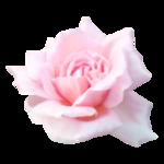 «Romantic_Illusion»  0_85ee1_6764ac52_S
