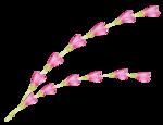«whitebell flowers»  0_879c1_6b8ddd_S