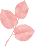 jss_oohhlala_rose leaves 1 pink.png
