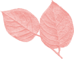 jss_oohhlala_rose leaves 2 pink.png