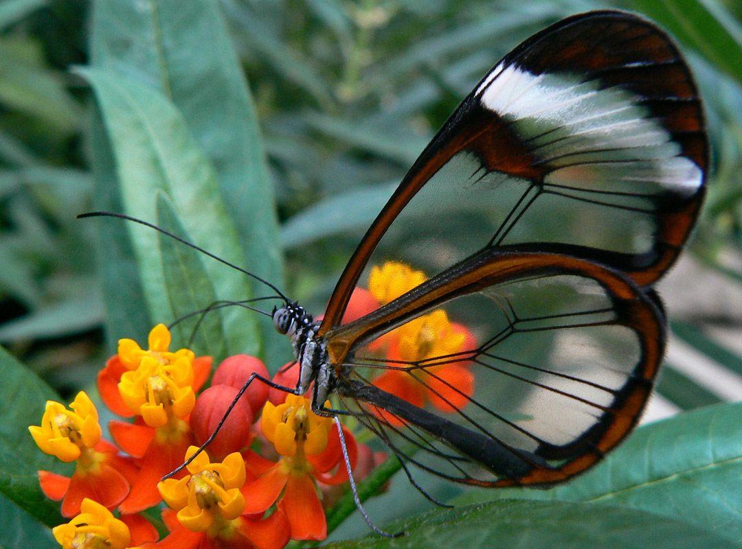 Бабочка по имени Грета