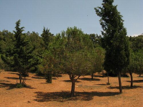 Белградский лес в окрестностях Стамбула. Автор фото: Станислав Кривошеев