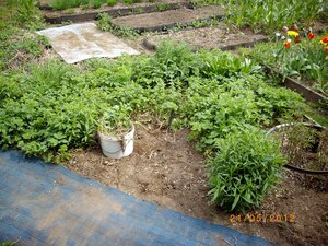 как дела на огороде