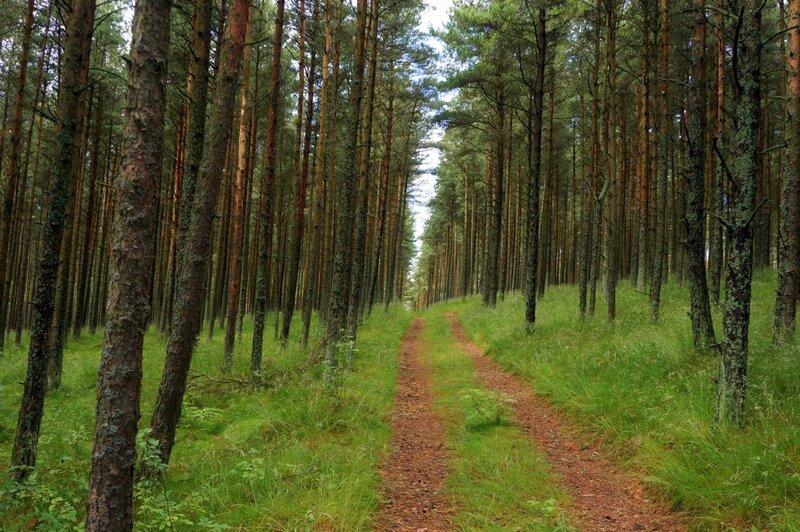 Дорога через лесопосадки