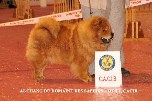 CACIB Amiens