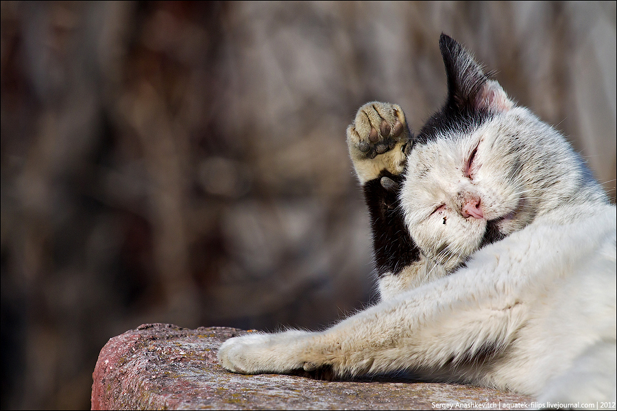 Балаклавские кошки