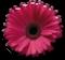 fleur-athe-tuto.png