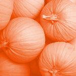 Dhl_halloween_pp1.jpg