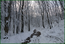 http://img-fotki.yandex.ru/get/6111/15842935.41d/0_f185a_ed198cc2_orig.jpg