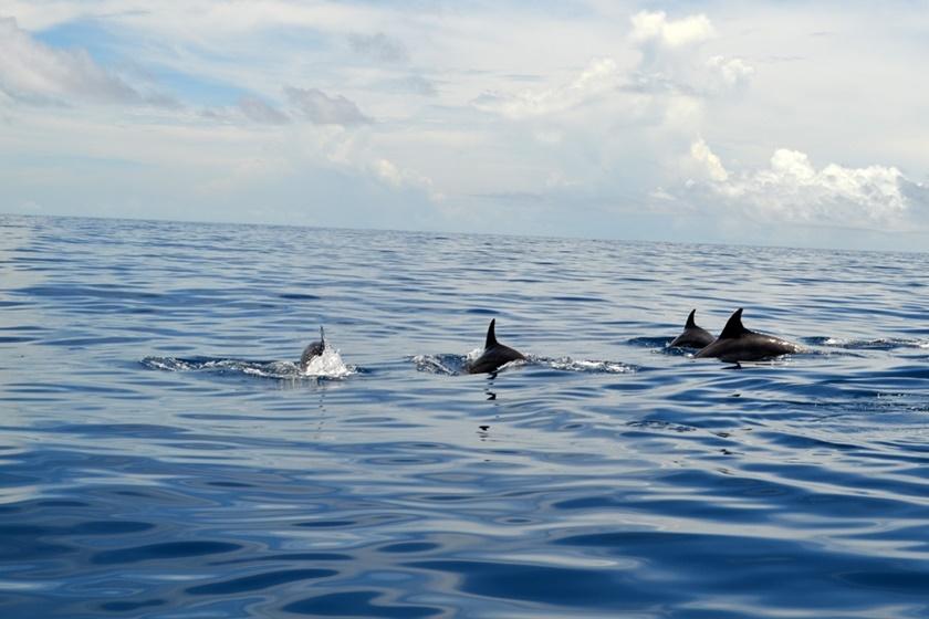 Дельфины у побережья Венесуэлы. Красивые фотографии 0 141a4d 2d4bd986 orig