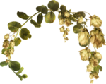 MRD_RT_dried-leaves-greenleaves.png