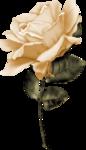 «Rose Wedding»  0_85633_cabc633b_S