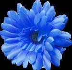 «La_magie_des_fleurs» 0_86261_4ac7e809_S
