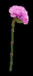 «Ninie - Purple Life» 0_8722c_d334a70e_S