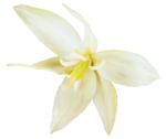 «whitebell flowers»  0_879b5_bcffff37_S
