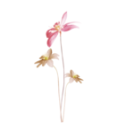 «Mystique_Designs_Flower_Bath» 0_87a10_5487ce76_S