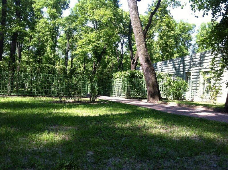 Летний сад без людей