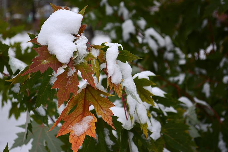 осень под снегом 15