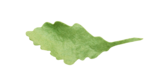 natali_autumn11_leaf6.png