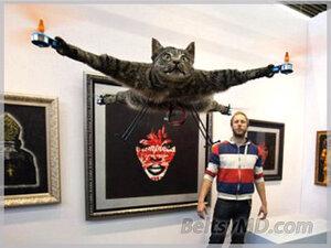 смотреть видео кота вертолёта
