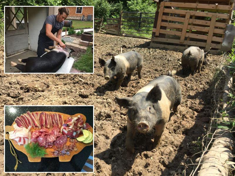 Свиноводство: от поросят до колбасы