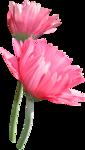 Carena Pink Gerbra 16.png