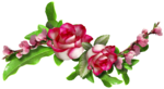 Carena Pink Gerbra Cluster 2.png