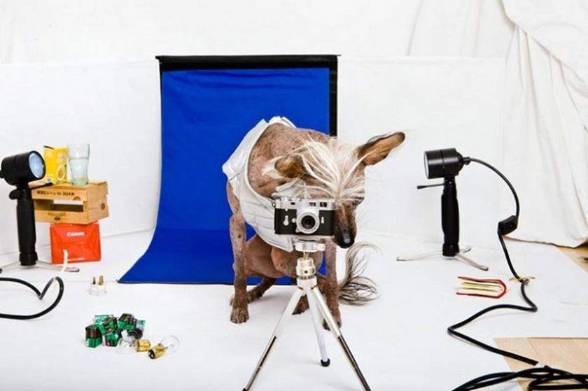 Проект «Чини». Фотографии китайской хохлатой собачки 0 141ac2 392a0bfe orig