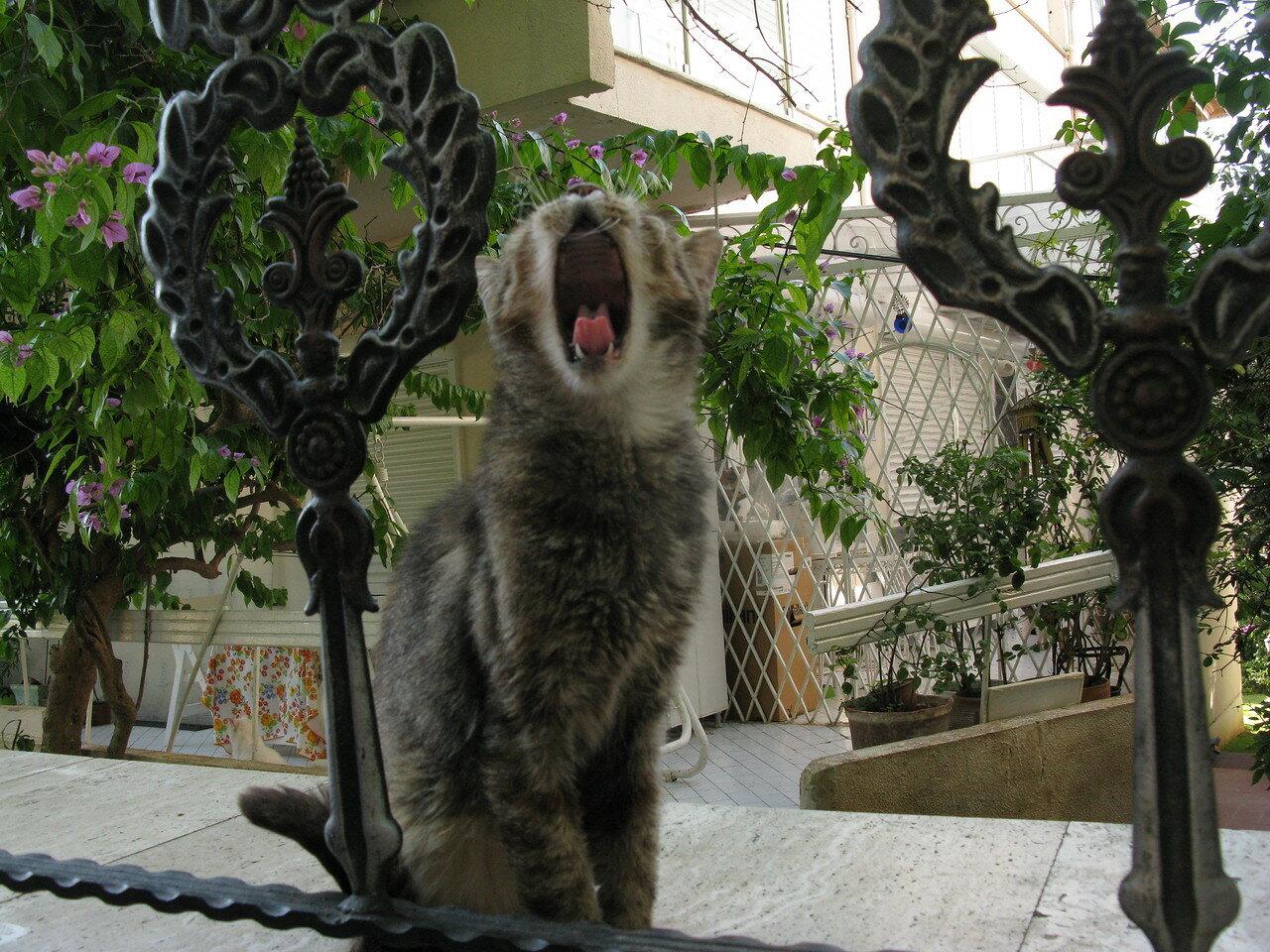 Кошки Стамбула. Автор фото: Станислав Кривошеев