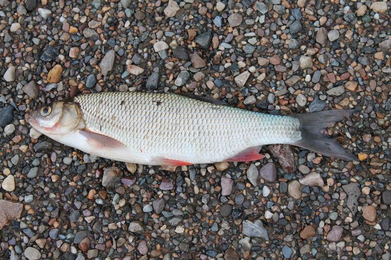 печора фото река рыбалка