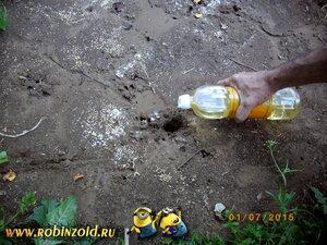 как вывести муравьёв