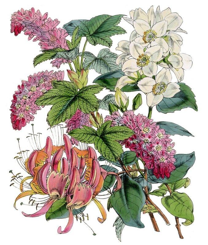 Открытки ботаника, ура