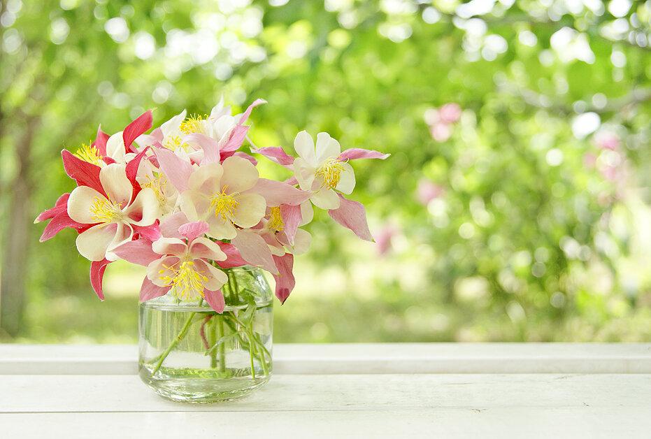 Пеларгония фото цветов