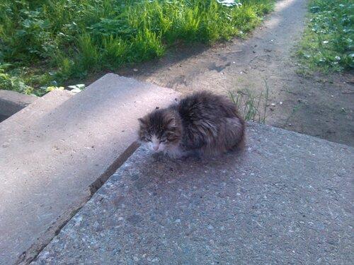Кот (без HDR)