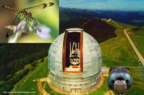 Стрекоза-телескоп